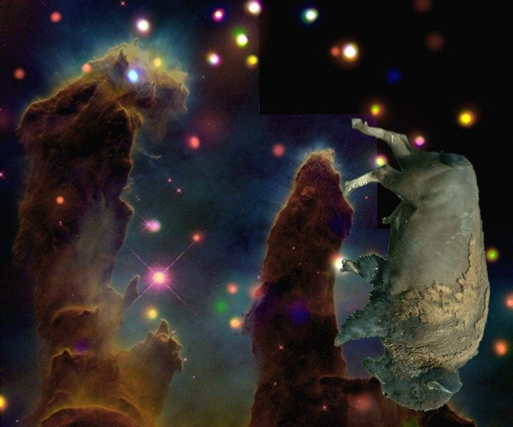 Space Bison